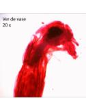 064 - Loupe binoculaire NIKON 20x éclairante
