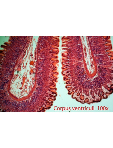 020 - Microscope BRESSER Erudit DLX