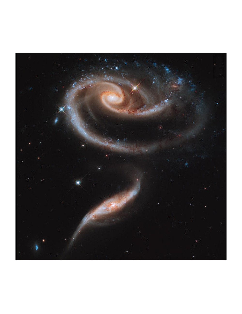 POSTER GALAXIE DE LA ROSE 50X50